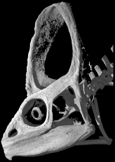 Photo of CT scan of chameleon