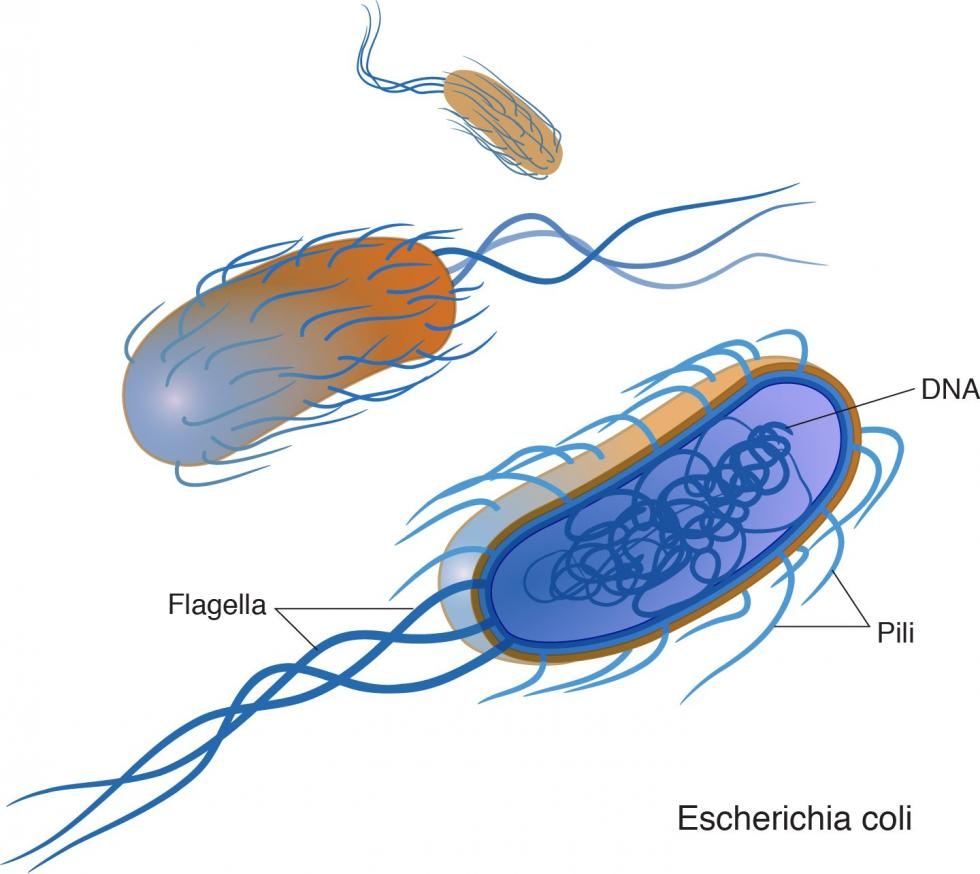 bacteria are small single celled organisms