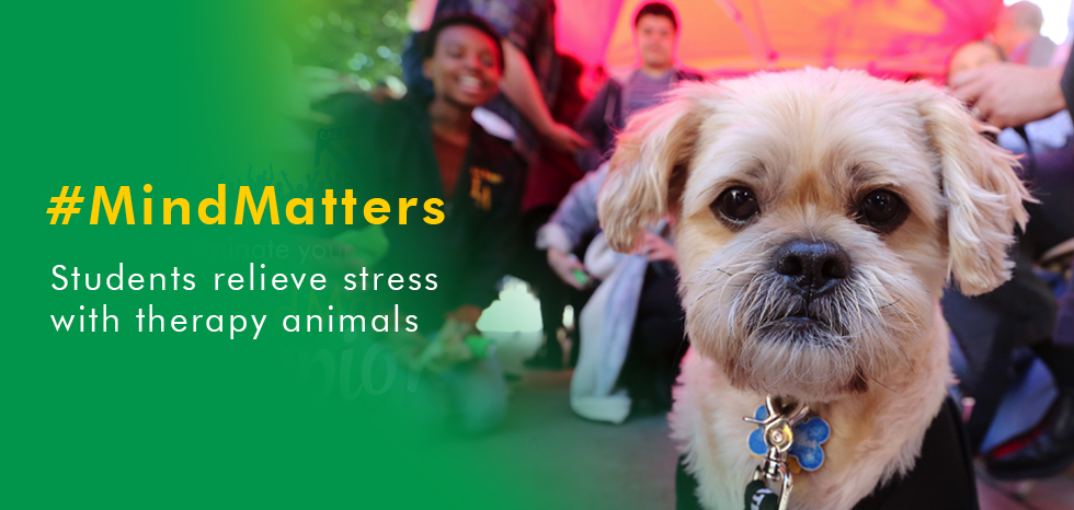 Mind Matters Therapy Dogs