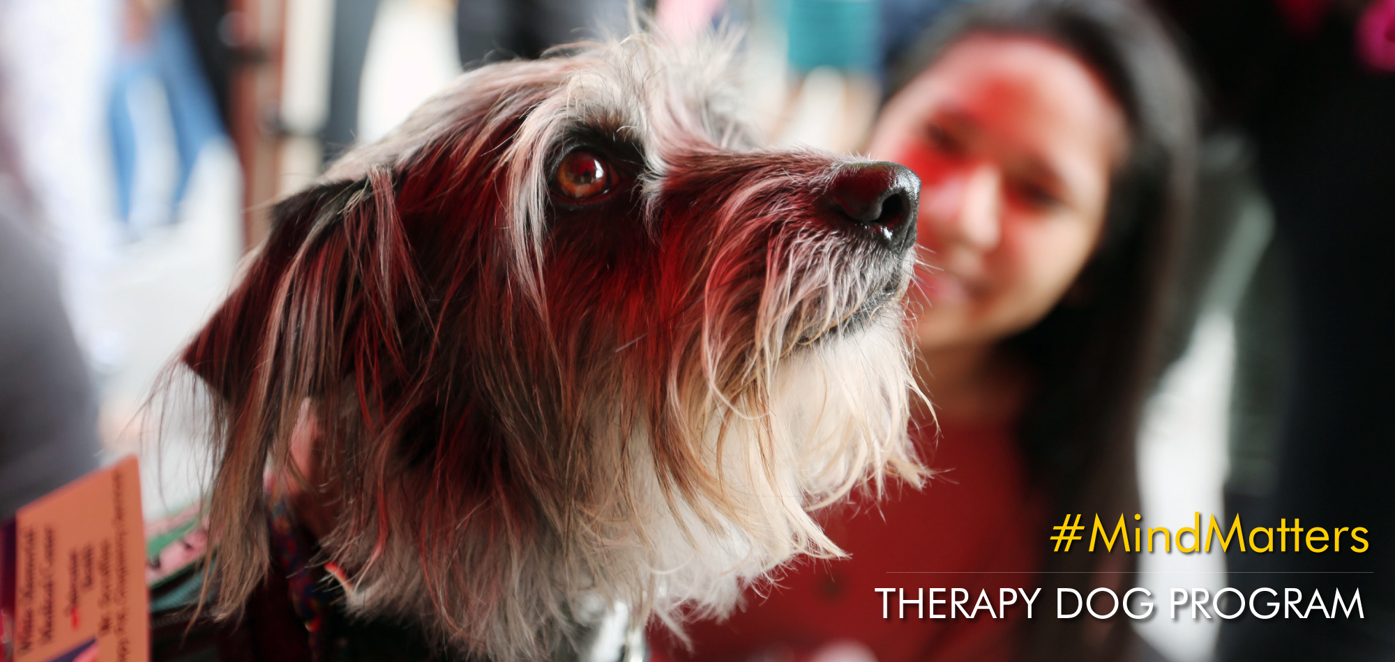 Therapy Dog Program