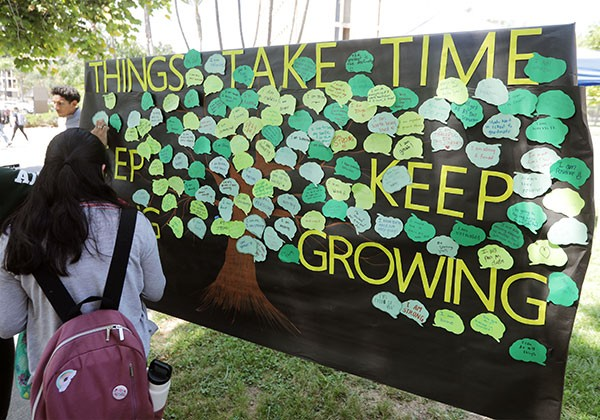 Wall of notes saying Thinks Take Time to Grow