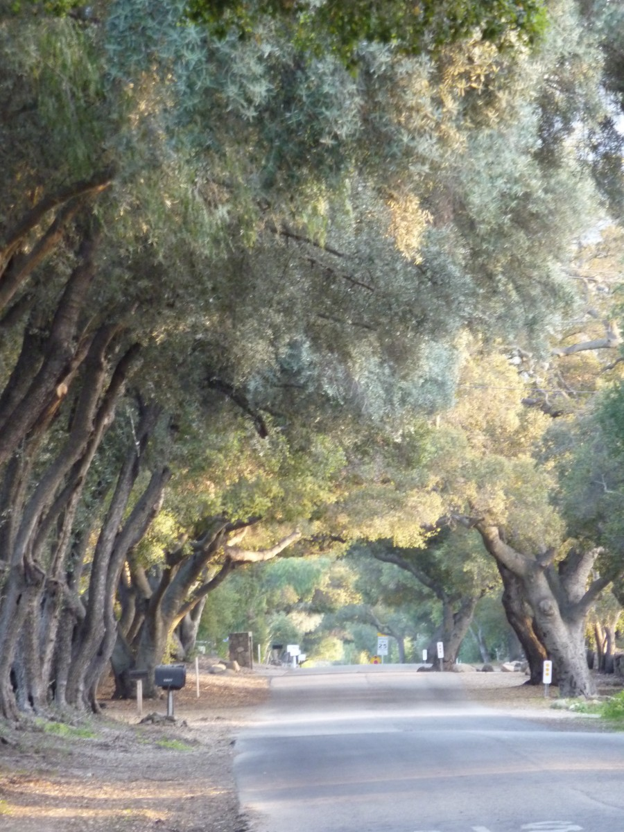 decorative image - trees and road
